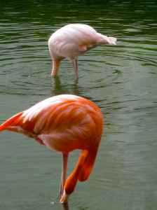 These flamingos hung out at our hotel